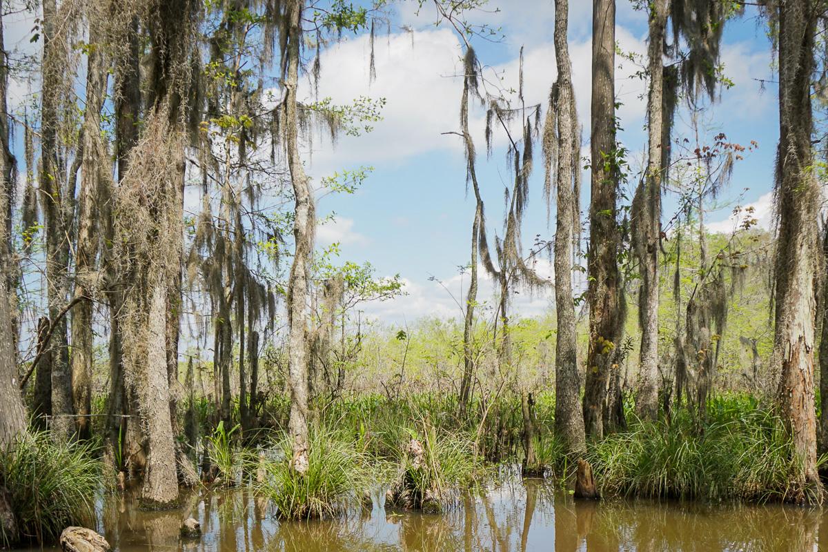 Swamp - New Orleans