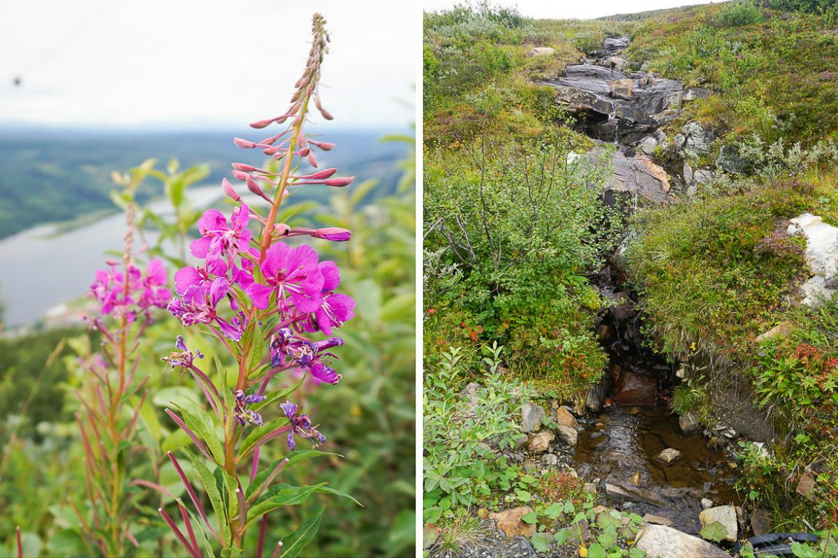 Sommar i Åre - Jämtland - Sverige