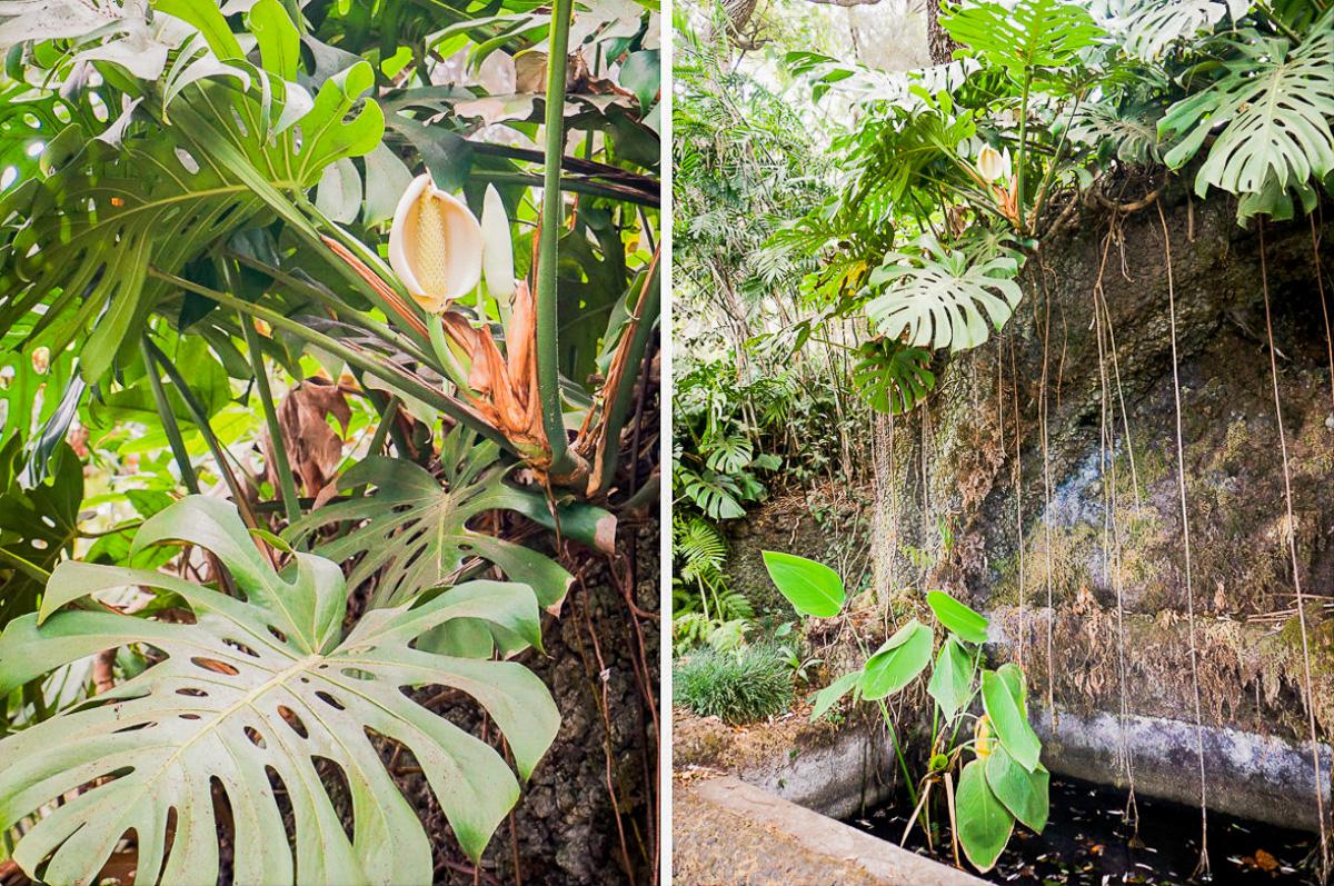 funchal-madeira-botanico-monte