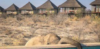 afrika namibia etosha