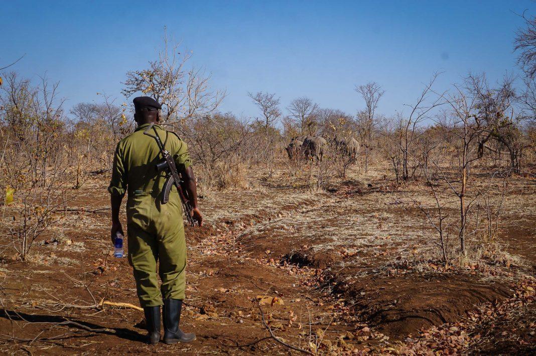 afrika-victoria-falls-zambia-white-rhino-walking-safari-2