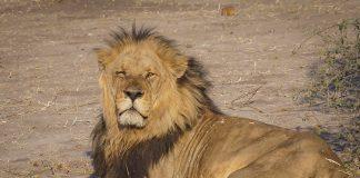 botswana safari chobe nationalpark